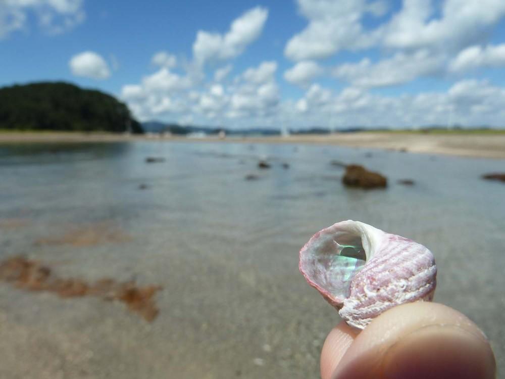 My Iridescent Shell