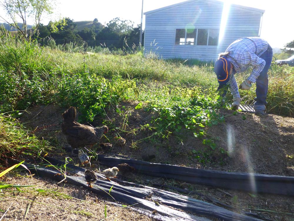 Little Gardeners Lending A Hand