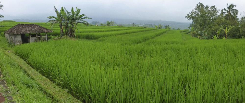 Rural Bali