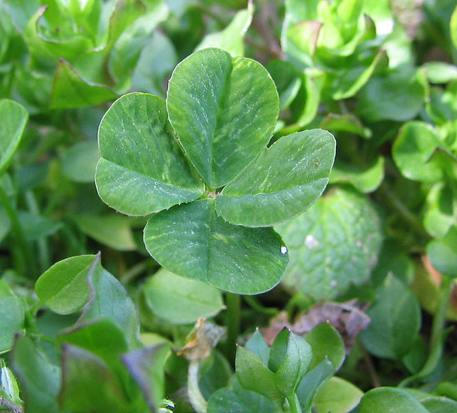 Fortunately i have a patch of four leaf clovers in my garden so am never troubled by bad luck!