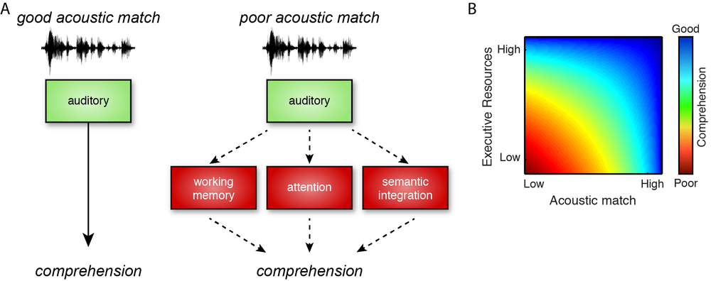 Figure 1. (A) Speech signals that match listeners' perceptual expectations are processed relatively automatically, but when acoustic match is reduced (due to, for example, noise or unfamiliar accents), additional cognitive resources are needed to compensate. (B) Executive resources are recruited in proportion to the degree of acoustic mismatch between incoming speech and listeners' representations. When acoustic match is high, good comprehension is possible without executive support. However, as the acoustic match becomes poorer, successful comprehension cannot be accomplished unless executive resources are engaged. Not shown is the extreme situation in which acoustic mismatch is so poor that comprehension is impossible.