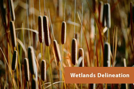 Georgia Wetlands Delineation