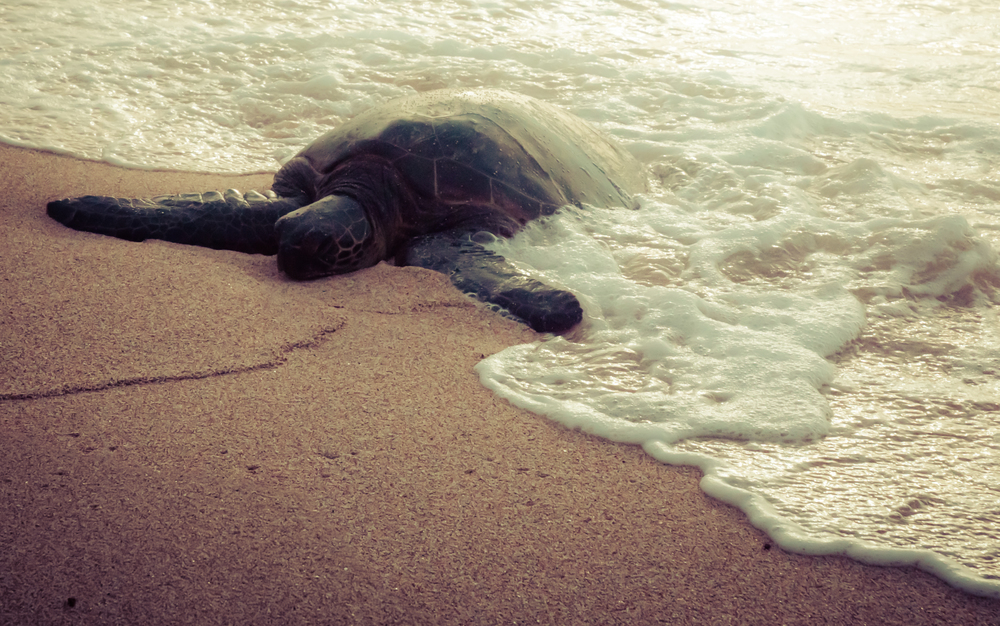 Maui Vacation DSC_7813-HDR.jpg