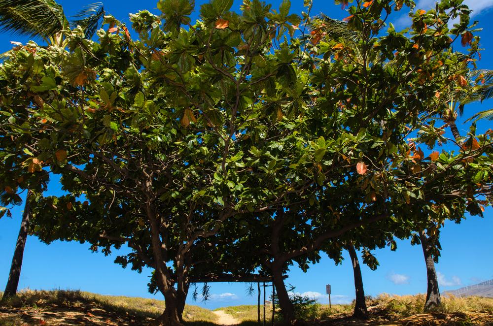 Maui Vacation DSC_7760.jpg