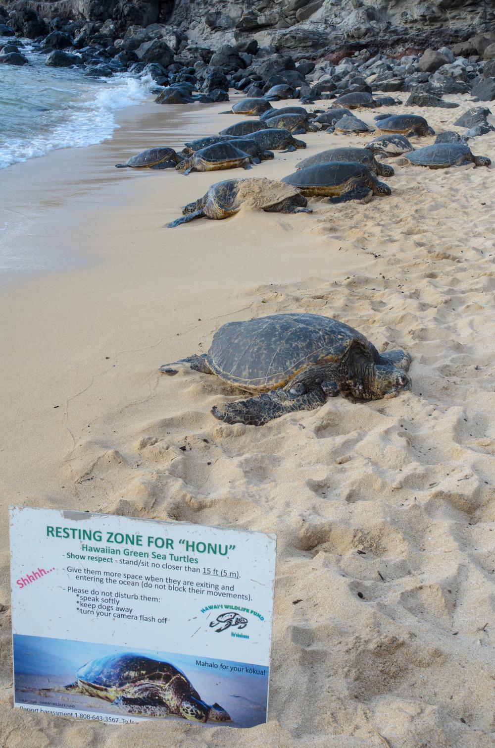 Maui Vacation DSC_7815.jpg