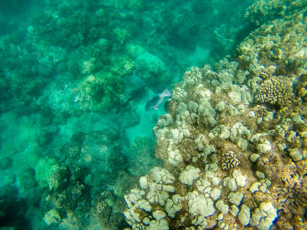 Maui Vacation GOPR7403.jpg