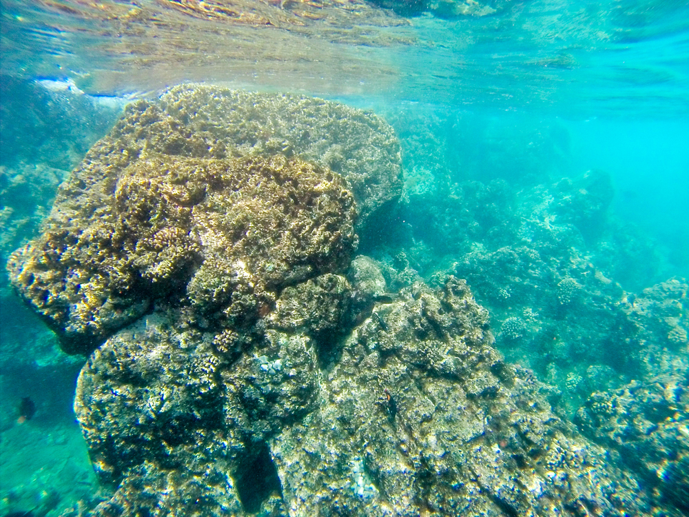 Maui Vacation GOPR7434.jpg
