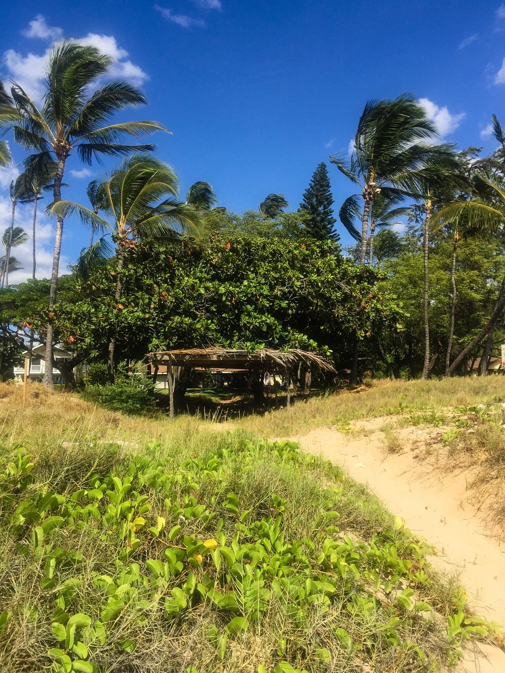 Maui Vacation IMG_0269.jpg