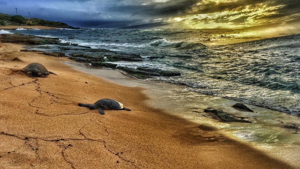 Maui Vacation IMG_1056.jpg