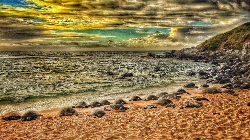 Maui Vacation IMG_1055.jpg