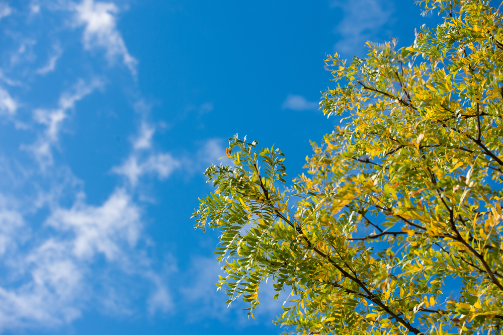 Blue Skies and Yellow Trees.jpg