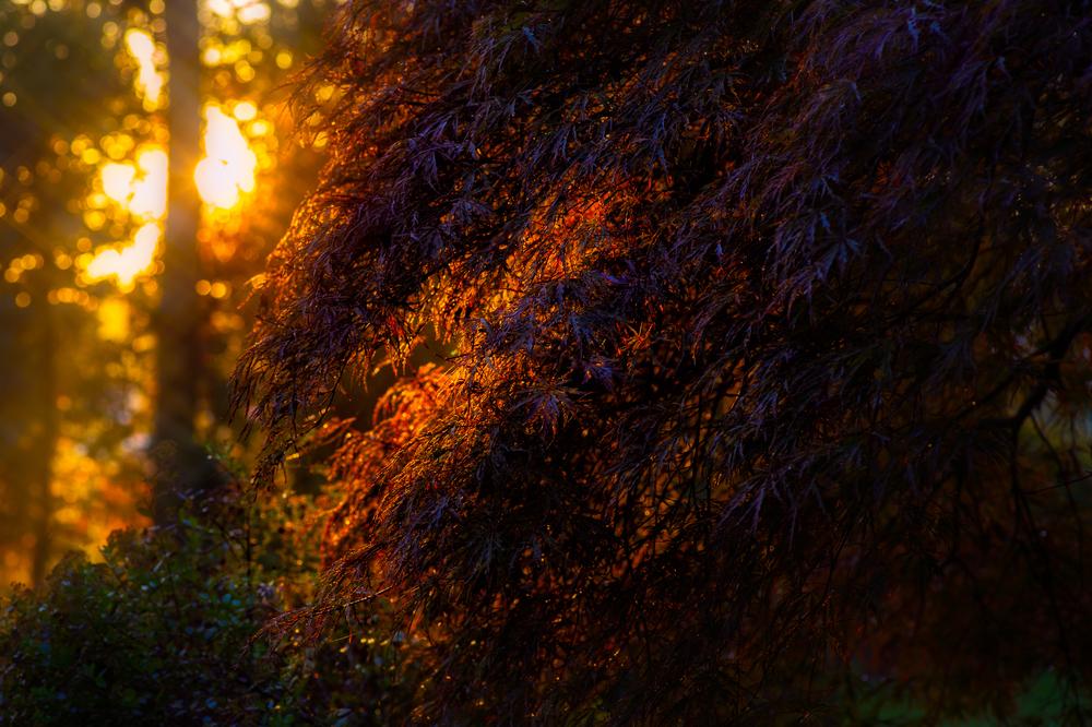 Morning Glow: Nikon D4 Tokina 100mm f/2.8 macro @ f/5.6 1/200 sec ISO 640