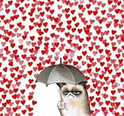 i luuurve grumpy cat <3