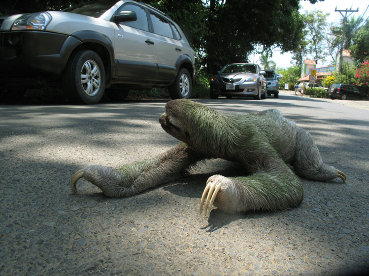 Rafael Fuchs_Sloth 2.jpg