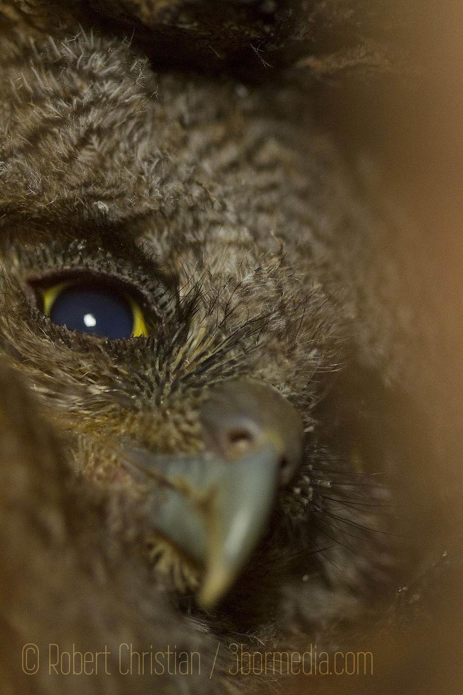 owl Chick B_Print.jpg