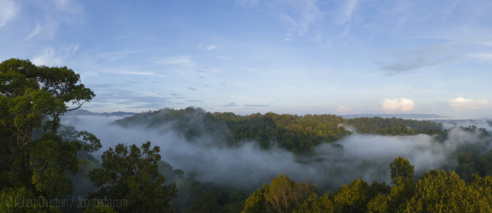 The view from the Canopy Walkway at Ulu Temburong National Park in Brunei.