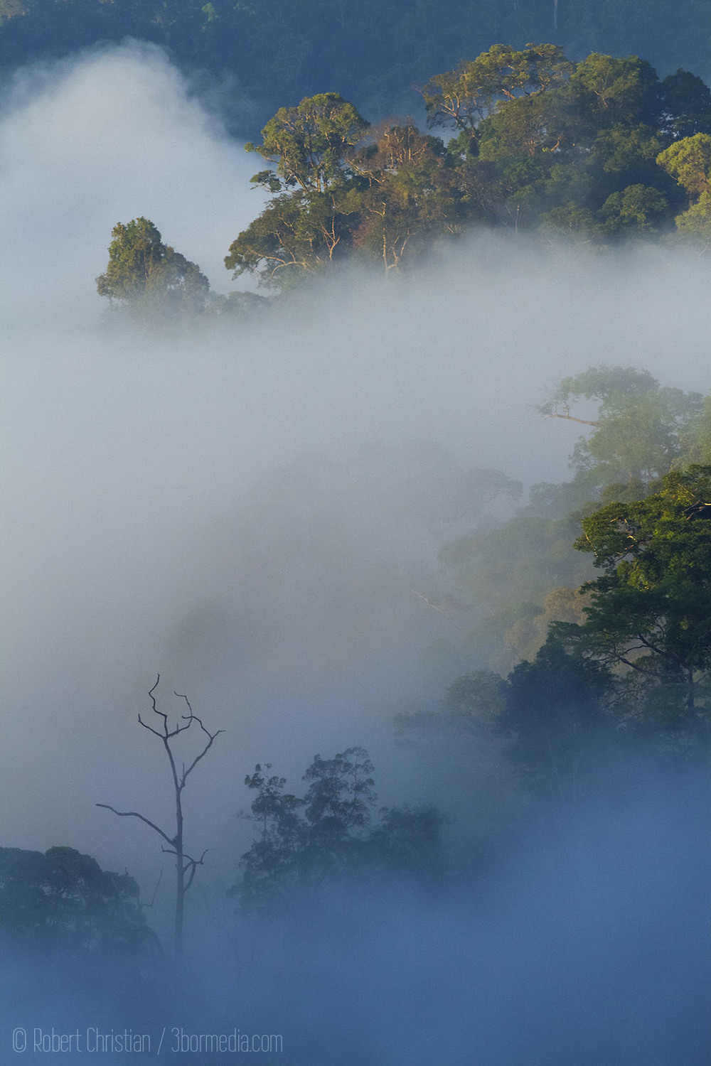Mist Rising from Canopy