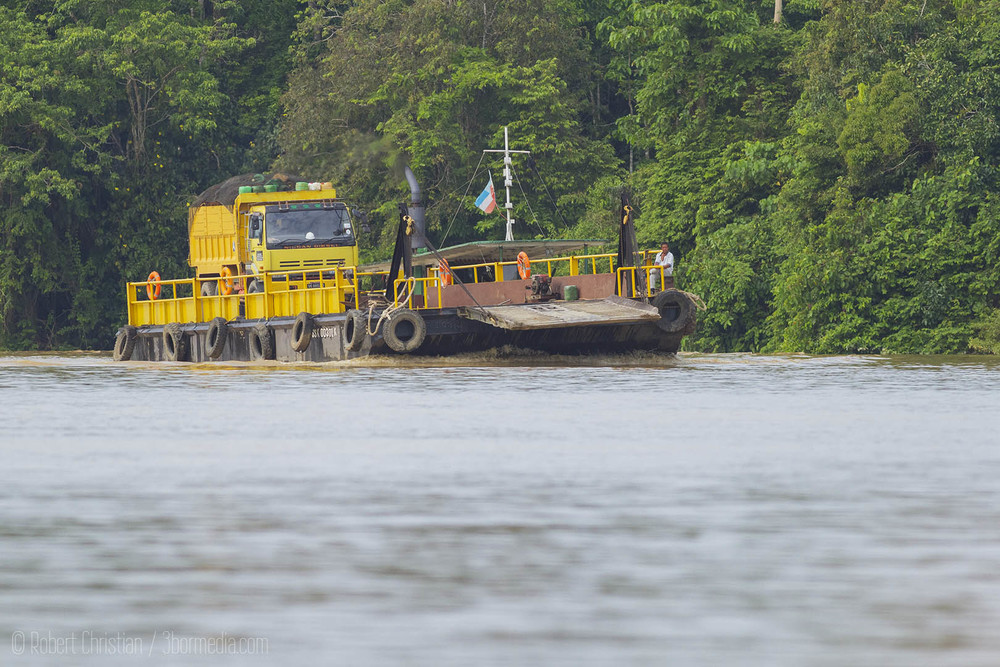 The fruit from the Oil Palm trees being transported from the plantations along the Kinabatangan