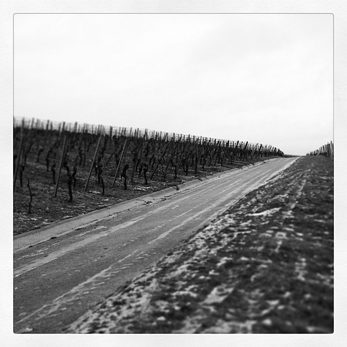 winter-vineyards.jpg