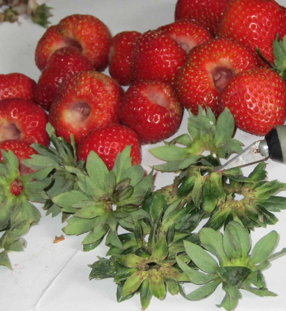 stawberrysepals.JPG