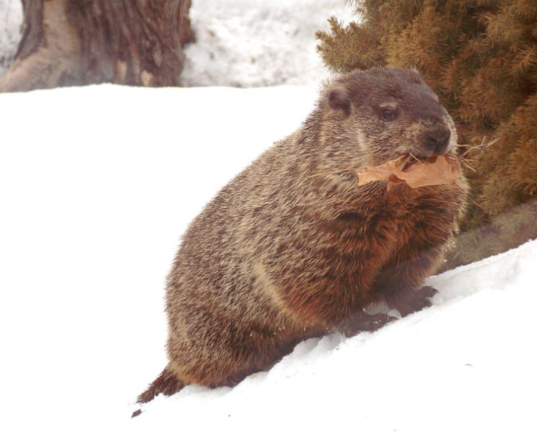 Happy Groundhog's Day 2019.png