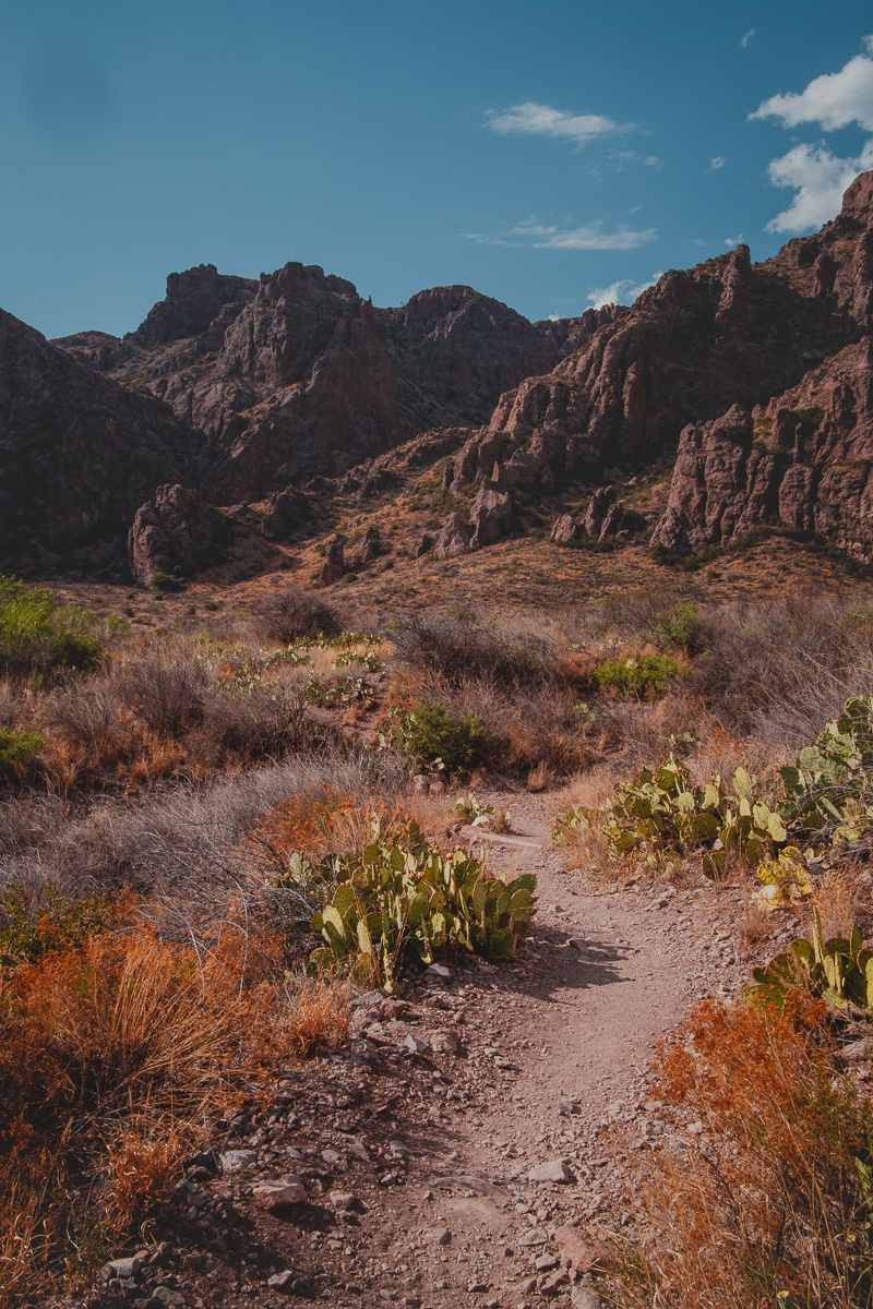 path in the desert leading to rocky mountain formations in big bend texas