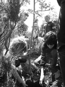 treeplanting1.jpg