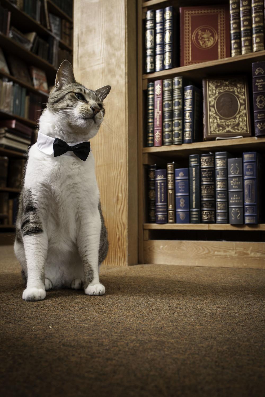 Bookstore_08_IMG_4138.jpg