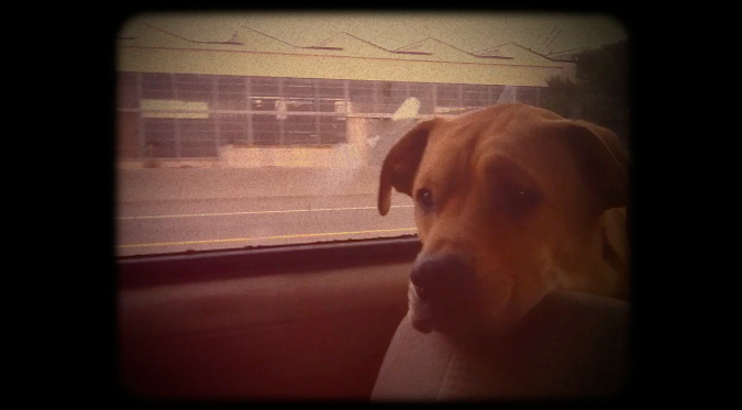 Snapshot of an experimental reel starring Pavel the Dog.