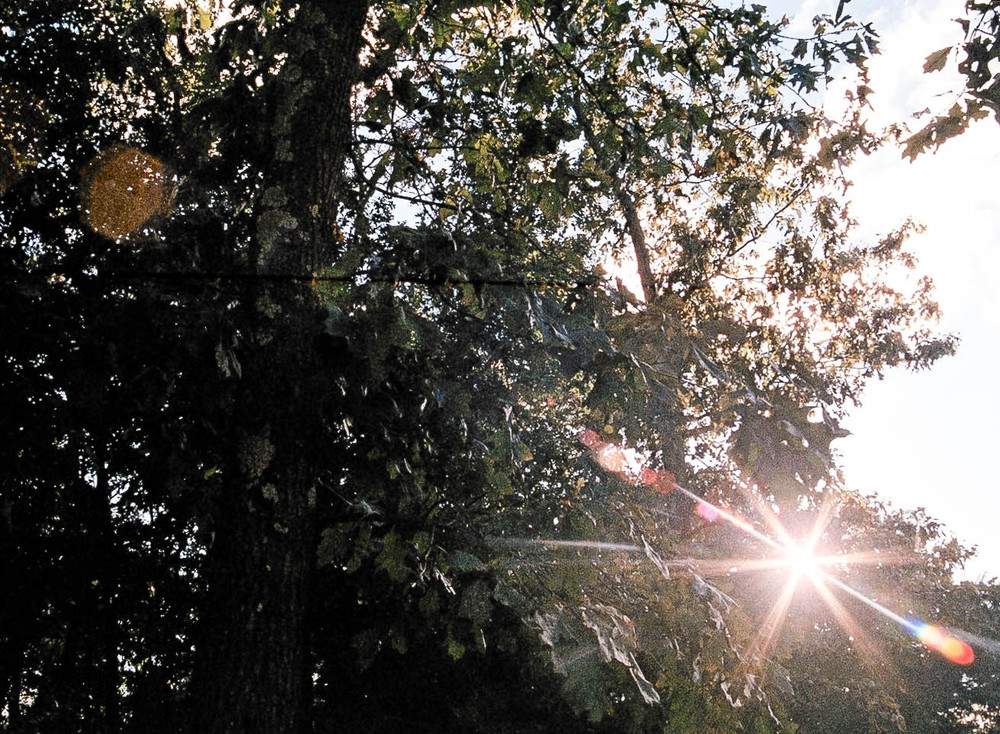 FILM-3.jpg