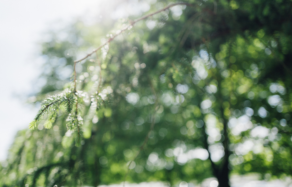 Bokeh Sample