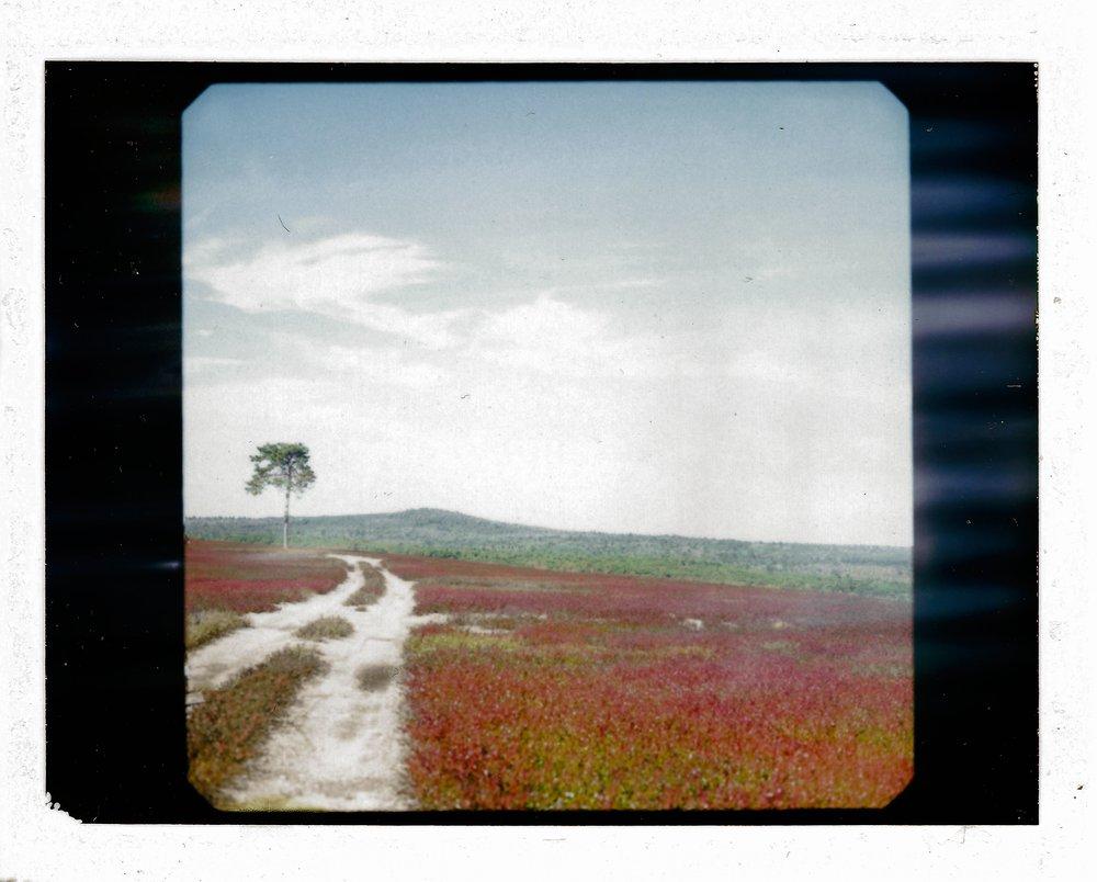 jay-cassario-polaroid-RZ670003.jpg