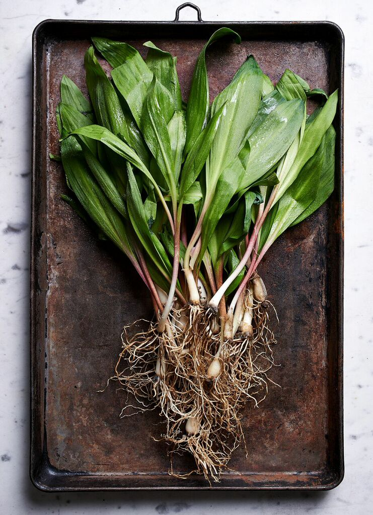Wild ramps. Photo by Fred Turko