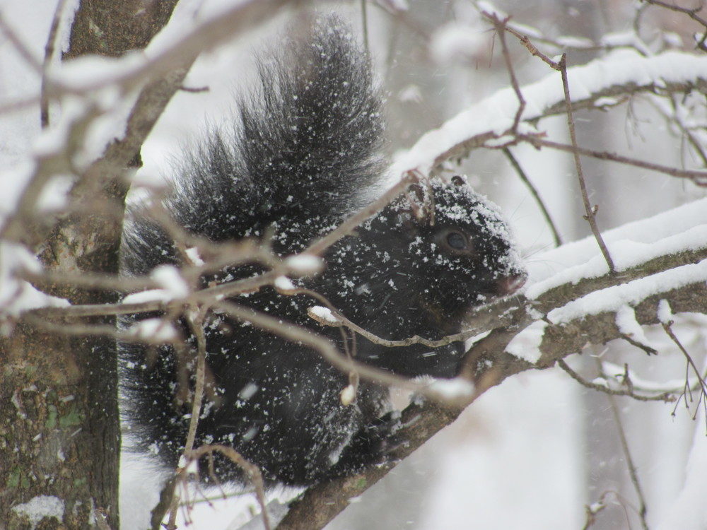 ...and this frozen squirrel