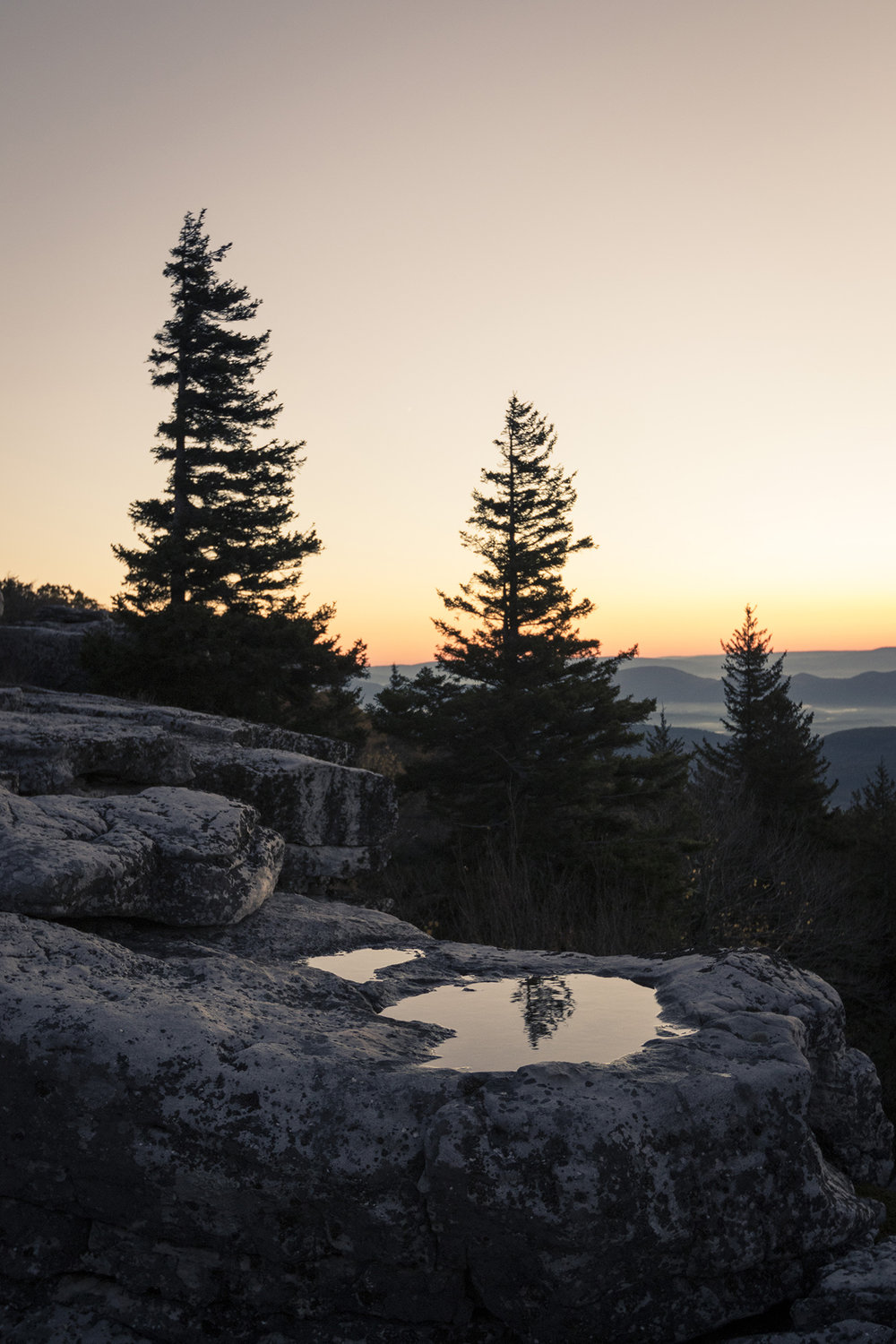 Web-DollySods-4388.jpg