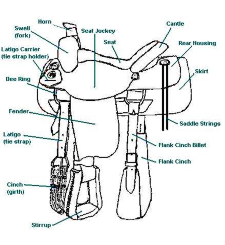 Blank diagram of saddle parts circuit diagram symbols anatomy of a western saddle choice image human anatomy diagram organs rh fabriqueta net saddle parts description english saddle diagram ccuart Choice Image