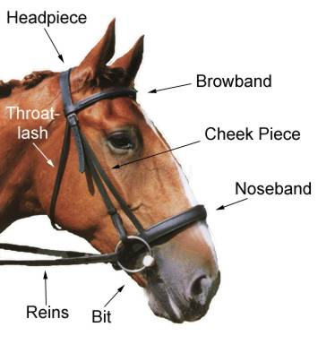 bridle diagram horseformula rh horseformula com Horse Bridle Worksheet Putting a Bridle On a Horse