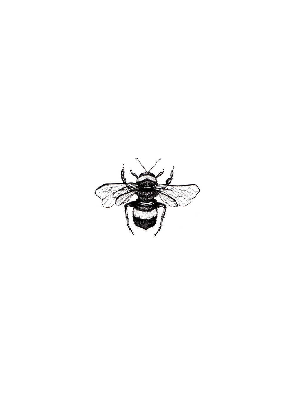 Playing Around With The Idea Of Having Some Honey Bee Wallpaper Bzz
