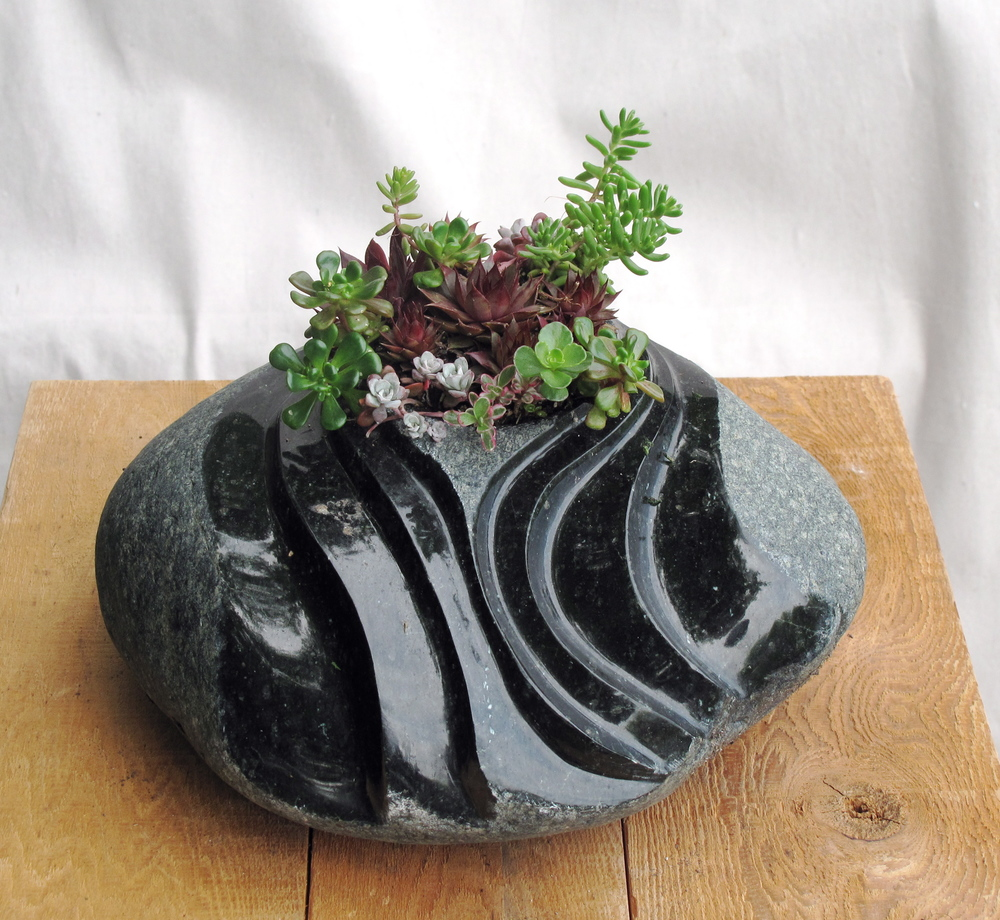 Swirl plante 1.jpg