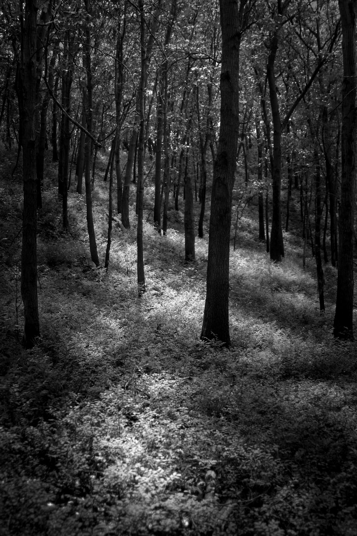 dune_oaks.jpg