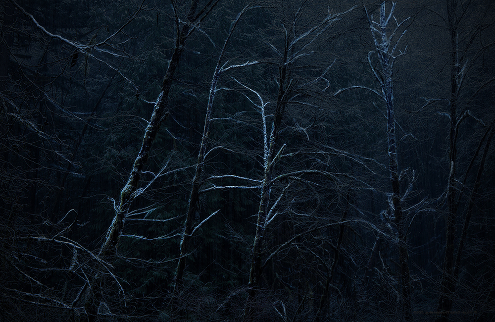3D projection-mapped light on hemlock trees in rural West Virginia above the site of a mining disaster.