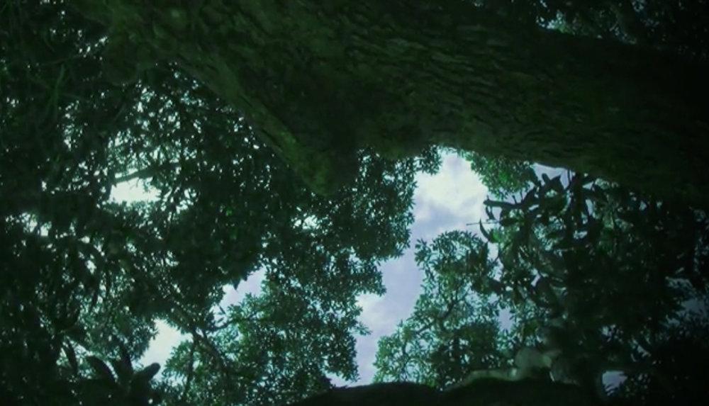 MEMORY TREE -