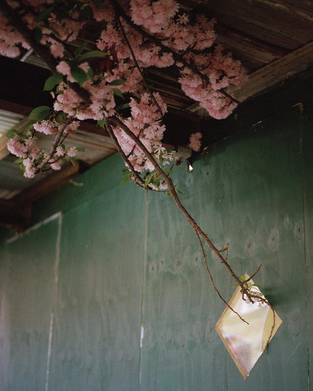 2017-05-11_Hass_Blossoms.jpg