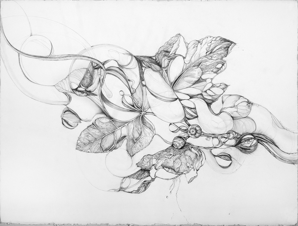 Sacred Fig, Graphite, 48'' x 42''
