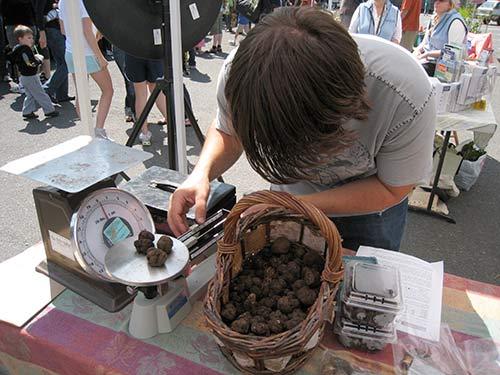 truffles-at-hollywood