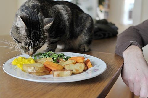 Cat-eats-mayonaise