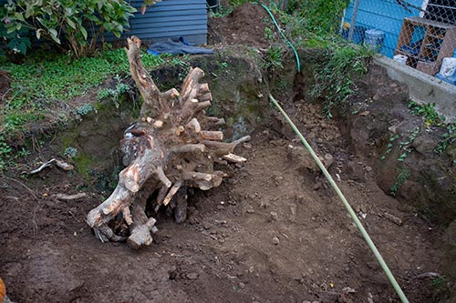 Sawn stump