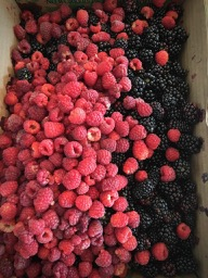 Picked lots of berries in early July between books 21 & 22.