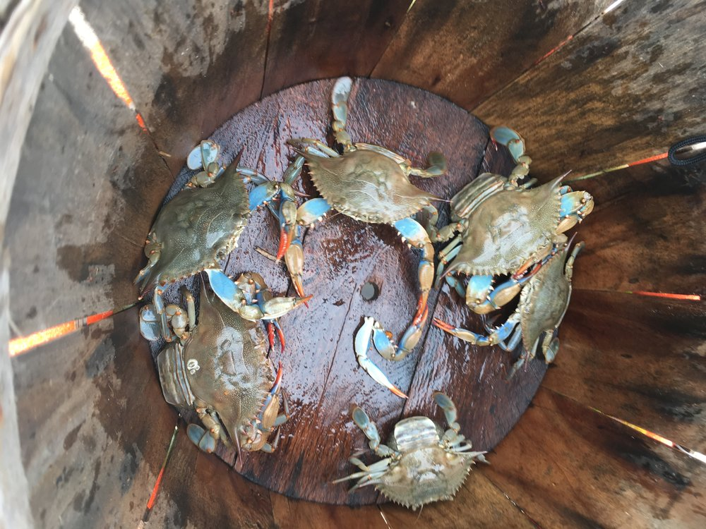In early August, I finished  Kitchen Confidential  and caught a laughable amount of blue crab in Norfolk.