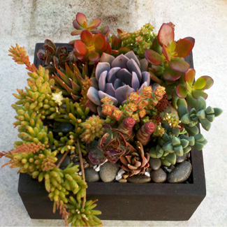 Tabletop Succulent Boxes